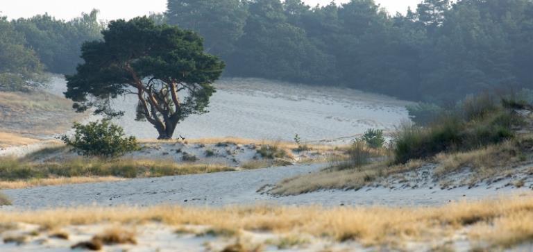 fit voor talent locatie drunense duinen